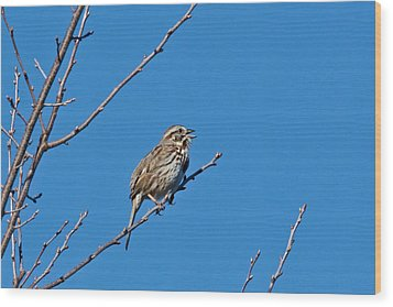 Wood Print featuring the photograph Song Sparrow by Michael Peychich