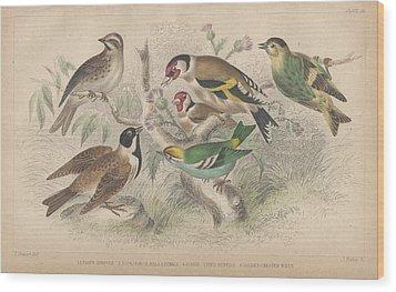 Songbirds Wood Print by Rob Dreyer