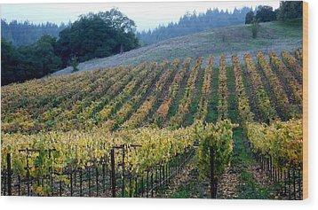 Sonoma County Vineyards Near Healdsburg Wood Print