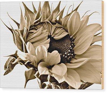 Sophisticated Wood Print by Gwyn Newcombe
