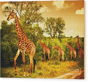 South African Giraffes Wood Print