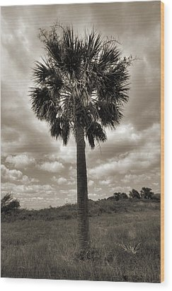 South Carolina Palmetto Palm Tree Wood Print by Dustin K Ryan
