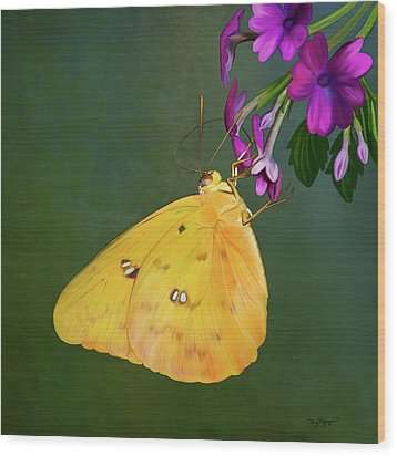 Southern Dogface Butterfly Wood Print by Thanh Thuy Nguyen