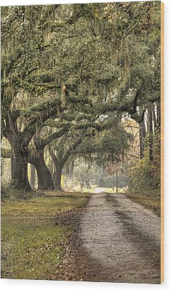 Southern Drive Live Oaks And Spanish Moss Wood Print by Dustin K Ryan