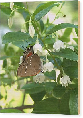 Wood Print featuring the photograph Southern Hairstreak On Sparkleberry by Peg Urban