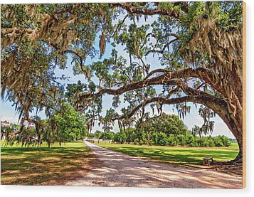 Southern Serenity Wood Print by Steve Harrington