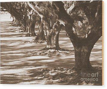 Southern Sunlight On Live Oaks Wood Print by Carol Groenen