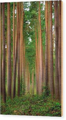 Spaghetti Trees Wood Print by Svetlana Sewell