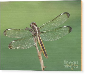 Wood Print featuring the photograph Spangled Skimmer Dragonfly Female by Donna Brown