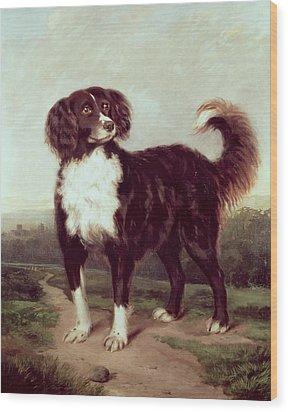Spaniel Wood Print by JW Morris