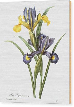Spanish Iris Wood Print by Granger