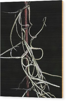 Wood Print featuring the photograph Spanish Moss On Wire by Richard Rizzo