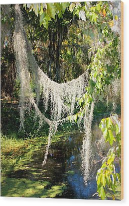 Spanish Moss Over The Swamp Wood Print by Carol Groenen