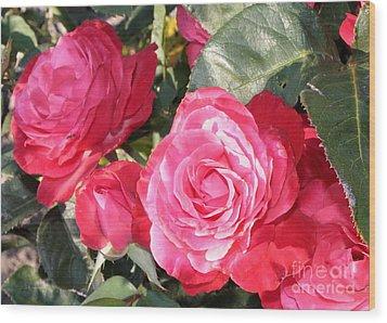 Sparkling Roses Wood Print by Carol Groenen