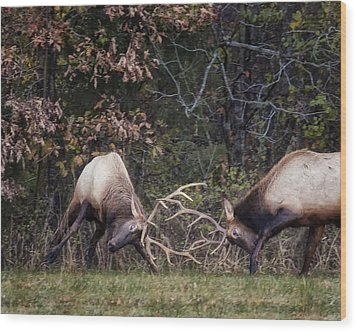 Wood Print featuring the photograph Sparring Bachelor Bulls In Boxley Valley by Michael Dougherty