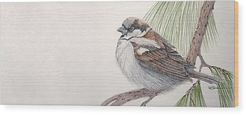 Sparrow Among The Pines Wood Print by Leslie M Browning