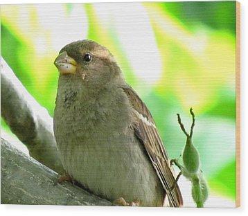 Sparrow And Walnut Bud Wood Print by Lisa Jayne Konopka