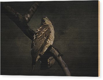 Sparrow Hawk Wood Print