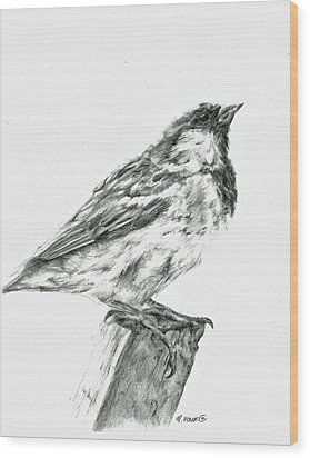 Sparrow Study Wood Print by Meagan  Visser