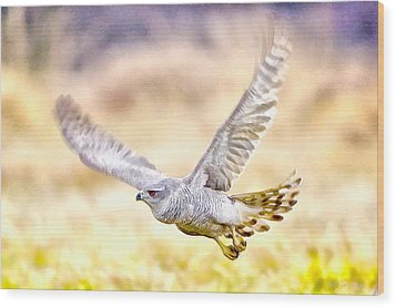 Sparrowhawk Wood Print