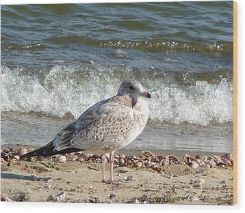 Speckled Brown Gull Wood Print by Margie Avellino