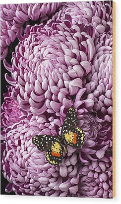 Speckled Butterfly On Red Mum Wood Print by Garry Gay