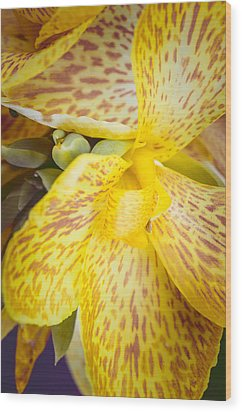 Wood Print featuring the photograph Speckled Canna by Christi Kraft