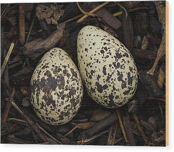 Speckled Killdeer Eggs By Jean Noren Wood Print by Jean Noren
