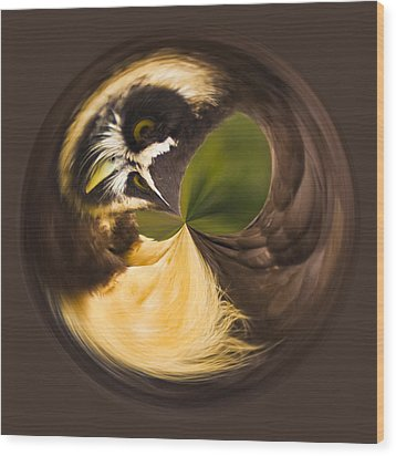 Spectacled Owl Orb Wood Print by Bill Barber