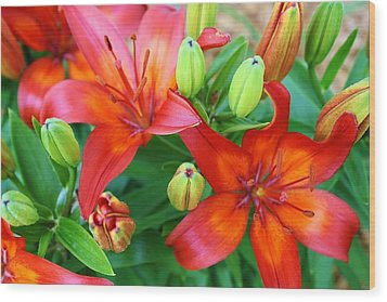 Wood Print featuring the photograph Spectacular Day Lilies by Bruce Bley