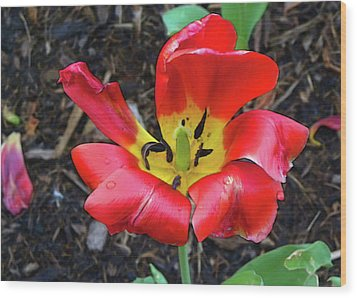 Wood Print featuring the photograph Spent Tulip by Larry Bishop