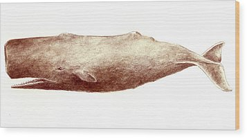 Sperm Whale Wood Print by Michael Vigliotti