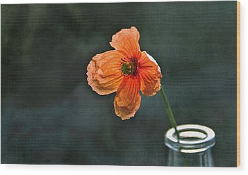 Spicy Red Poppy Wood Print by Marion McCristall