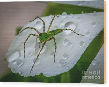 Spider And Flower Petal Wood Print by Tom Claud