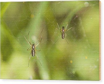 Spider Couple Wood Print by Jouko Mikkola
