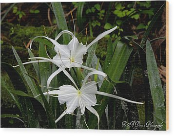 Wood Print featuring the photograph Spider Lilies by Barbara Bowen