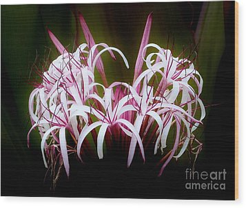 Spider Lilly Wood Print by Amar Sheow