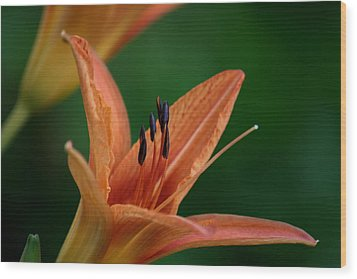 Wood Print featuring the photograph Spider Lily 2 by Cathy Harper