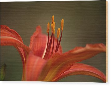 Wood Print featuring the photograph Spider Lily by Cathy Harper