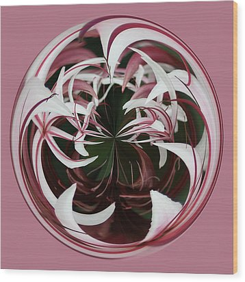 Spider Lily Orb Wood Print by Bill Barber