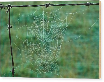 Spider Web In The Springtime Wood Print by Douglas Barnett