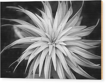 Wood Print featuring the photograph Spiral Black And White by Christina Rollo