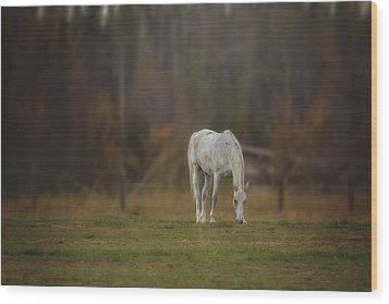 Spirit Horse Wood Print by Debby Herold