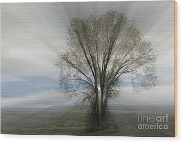 Wood Print featuring the photograph Spirit Of Nature by Sandra Bronstein