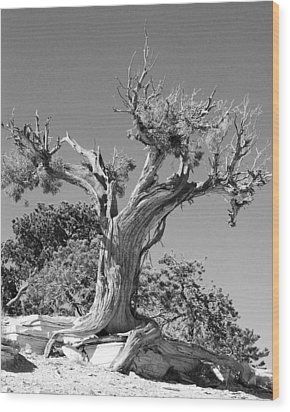 Wood Print featuring the photograph Spirit Tree by Maggy Marsh