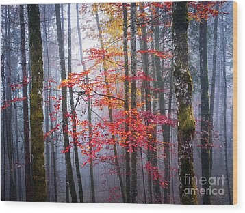 Wood Print featuring the photograph Splash Of Colour by Elena Elisseeva