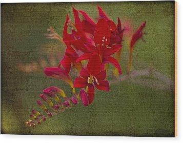 Splash Of Red. Wood Print