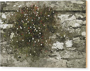 Wood Print featuring the photograph Splash by Tom Vaughan