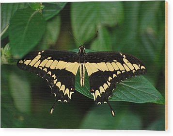 Wood Print featuring the photograph Splendid Yellow by Teresa Blanton