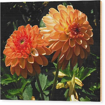 Splendor Of Fall Dahlias  Wood Print